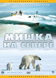 Мишка на Cевере: В поисках ледяного пути