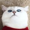 Pensive_Panda