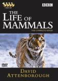 BBC: Жизнь млекопитающих (сериал)