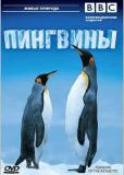 BBC: Пингвины
