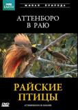 BBC: Райские птицы