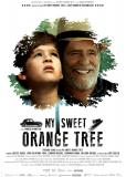 Моё апельсиновое дерево
