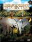 Необыкновенное путешествие: История про двух слонят