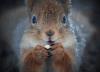 Julli_squirrel