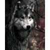 Wild_wolf23