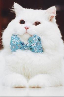 good_cat